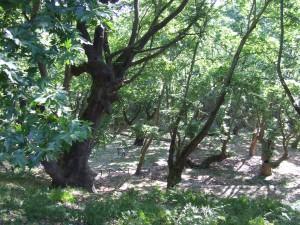 Fascinujúci les Leivethry
