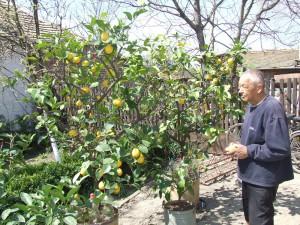 19Gulas - citrony