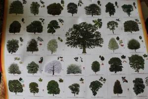Z bohatstva našich lesov