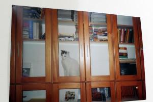 Mačka v (ne)dobrovoľnej izolácii