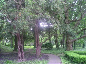 Jedinečné stromy – ginko (vpravo) a tis v hajdušickom parku upútajú pozornosť výletníkov