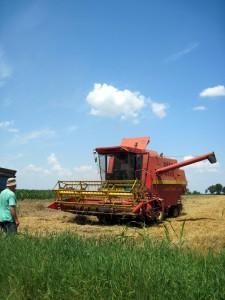 Sype, ale jej je málo – poľnohospodár Ján Šipický a kombajnista Pavel Cicka v Kovačici pri zbere pšenice