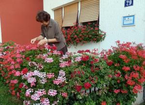 Zuzana Verešová na terase medzi pestrofarebnými muškátmi