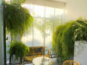 S veľkou láskou pestuje aj izbové kvety ako sú paprade a asparagusy