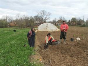 U Častvanov v záhrade… keď vysádzali zemiaky a zurčala jar
