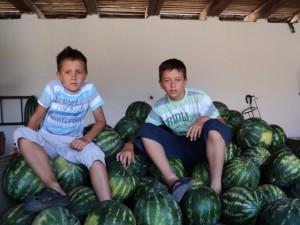Vnuci Vladimír (vľavo) a Aleksandar Petrovićovci nielenže majú radi melóny, ale aj pomôžu starým rodičom