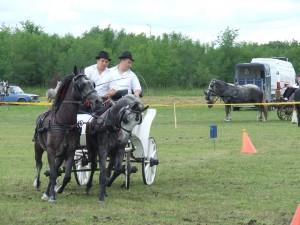 Súlad voziarov a koní...